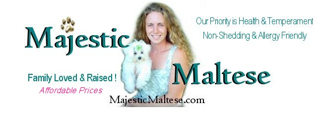 Majestic Maltese North Carolina Virginia Maltese Breeder Pups For